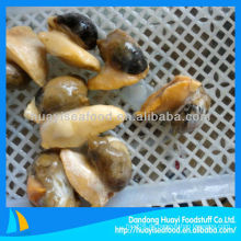 Gekochtes gefrorenes whelk Fleisch (Buccinum Undatum)