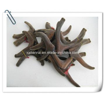 Natural Cornu Cervi Pantotrichum Extract Powder /Pilose Antler/Hairy Antler