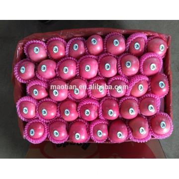 Chine Yantai meilleur prix fuji apple petites tailles