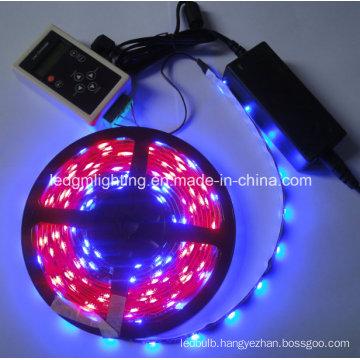Dream Color RGB 5050 Magic IC 1606 LED Strip