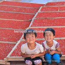 Купить сушеные ягоды goji из фермы