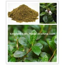 Extrait de feuille de figue, extrait de feuille d'olives, extrait de feuille de myrtille