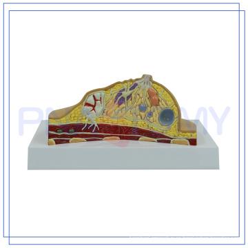 PNT-0741 Nuevo producto Modelo de examen de mama vivo para la escuela