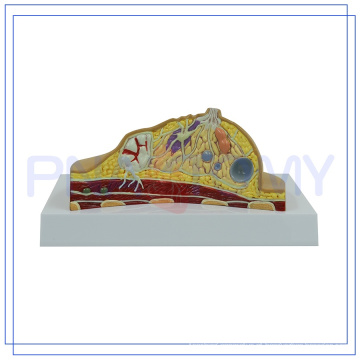 PNT-0741 Novo produto modelo de exame de mama Vivid para a escola