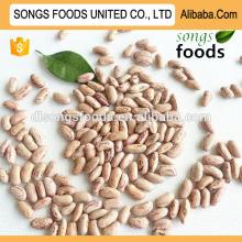 Scientific name of beans