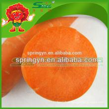 Verduras congeladas verduras frescas zanahorias amarillas mejor proveedor en China