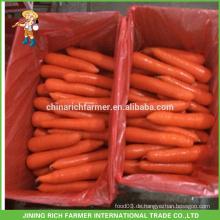 Spezielle neue Ernte Rote Karotte