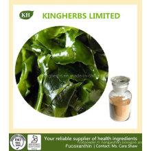 Perte de poids Extrait d'algues marron Fucoxanthine 5% ~ 20%, Fucoidan 85%