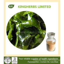 Weight Loss Brown Alga Extract Fucoxanthin 5%~20%, Fucoidan 85%