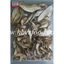 Crescido em 2016 Fatias secadas de alta qualidade do cogumelo