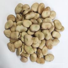 New crop 50-60 beans/100g Qinghai origin  broad beans