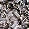 Hybrid certified sunflower seeds