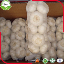 High Quality Fresh Normal White Galic