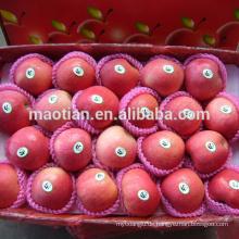 Apfelfrucht