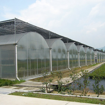 Green Poly Multi-Span Arch PC Greenhouse