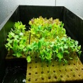 Hydroponics Rockwool Cube Tray Rockwool Grow Media