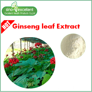 Panax Ginseng Stem & Leaf Extract