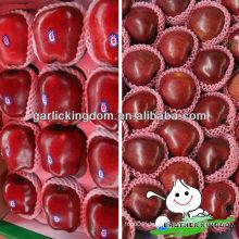 China Tianshui frischen roten Huaniu Apfel