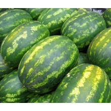 HW12 Waizu big oval green F1 hybrid watermelon seeds in vegetable seeds