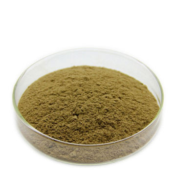 Pure Natural High Purity Organic Hippophae Rhamnoides Extract Dried Sea Buckthorn Berries Powder