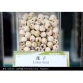 Organic Lotus Seed, Chinese Lotus Seed