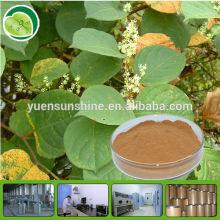 cosmetic material polygonum cuspidatum root extract P.E. powder/resveratrol 50% 98%