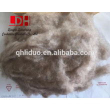 16/18 mm de longitud de fibra de cachemira morena depilada con fibra gruesa de 17,5 micras