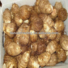 sell organic fresh taro