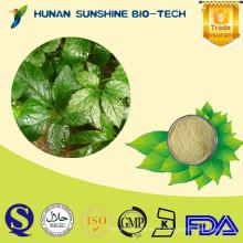 Extracto de planta de suministro de fábrica Extracto de gynostemma jiaogulan natural como ingredientes de té de hierbas