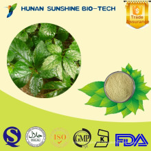 Factory Supply Plant Extract Natural jiaogulan Gynostemma Extract as Herbal Tea Ingredients