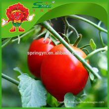 Tomates aux fruits sains et à faible teneur en calories dans le marché