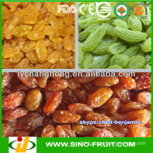 Raisins/names of all dry fruits
