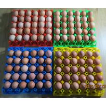 Máquina de bandeja de ovos de plástico 250ton