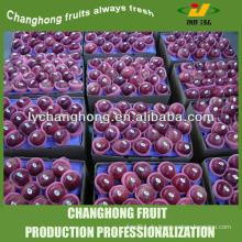 Karton 20kg Apfel aus chinesischem Großhandel