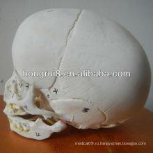 Модель младенческой черепа ISO, анатомический череп