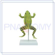 ПНТ-0820 высокого качества анатомические модели животных горячая образовательные игрушки Дошкольное