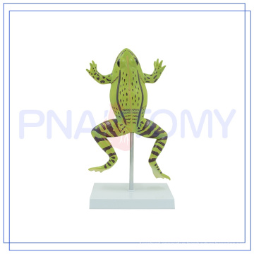 PNT-0820 high quality anatomical models of animals Hot Educational Toys Preschool
