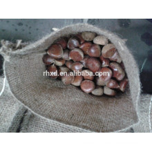 Dandong fresh chestnut 40-60 fresh chinese chestnut for sale