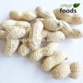 Importeurs de cacahuètes en Inde