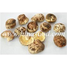 2.5-3cm Deformado Seco K Shiitake Mushroom