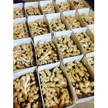 New Crop High Quality Air-Dry-Ginger in China