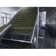 Secador especial de algas / algas