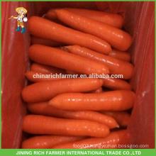 Fresh Carrot China/Fresh New Crop 2016 Carrot
