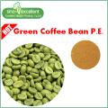 Chlorogene Säuren Grüner Kaffeebohnenextrakt