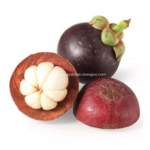 Jus de mangoustan en poudre