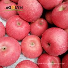 AGOLYN high quality delicious fresh sweet Qinguan Apple