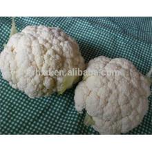 nueva cosecha de coliflor congelada vegetal con alta calidad