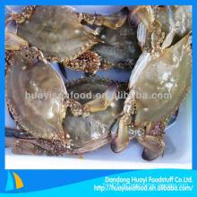 Gefrorene Meeresfrüchte Großhandel blaue Schwimmen Krabbe