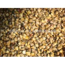 Gefrorene gekochte asiatische harte Muschel