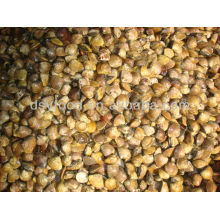 Frozen Cooked Asiatic Hard Clam